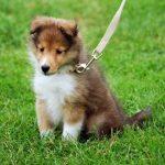正気か?韓国で子犬整形手術が流行る理由
